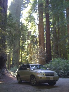Highlander in redwoods