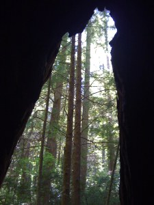Inside a Redwood