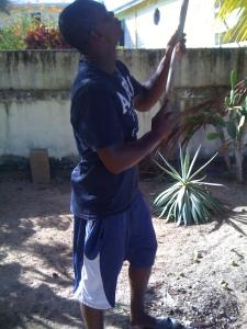 Junior pokes coconut