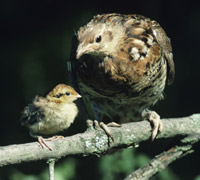 mother and baby bird