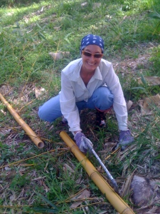 Parama harvesting bamboo copy