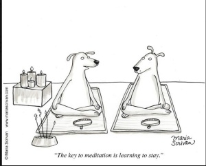 funny-dog-meditation