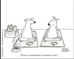 funny-dog-meditation